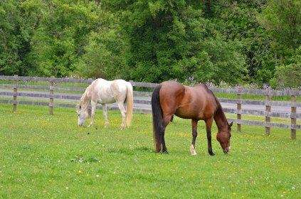 Cousins-Horses