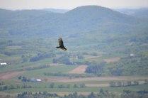 Hawk-Mt