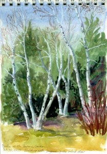 birches-at-the-botanic-garden-copyright-karen-johnson