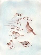 hungry-birds-copyright-fran-kelly