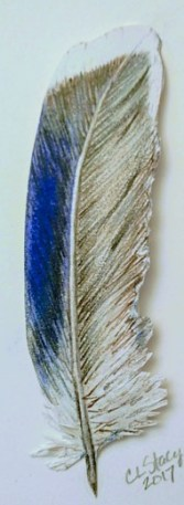 mallard-wing-feather-mixed-media-copyright-catherine-stacy
