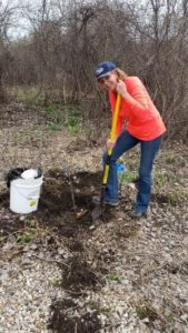 Free Oak Tree Sapling Distribution @ Nature At The Confluence Campus