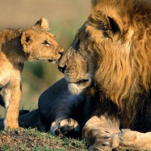 Kenya Odyssey Safari Tour