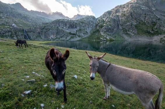 Les ânes au refuge de Vens