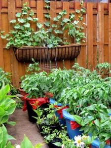 terrace-garden-3