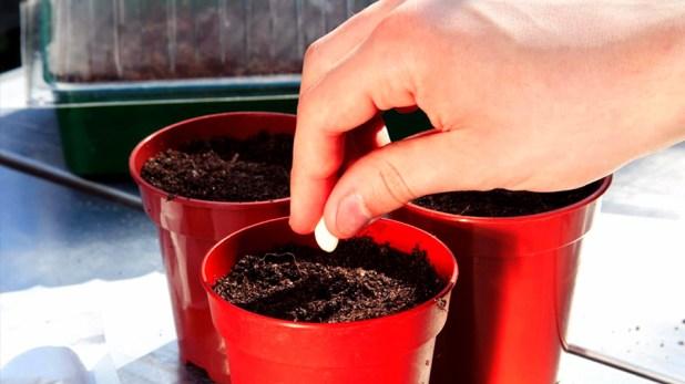 seedling-7