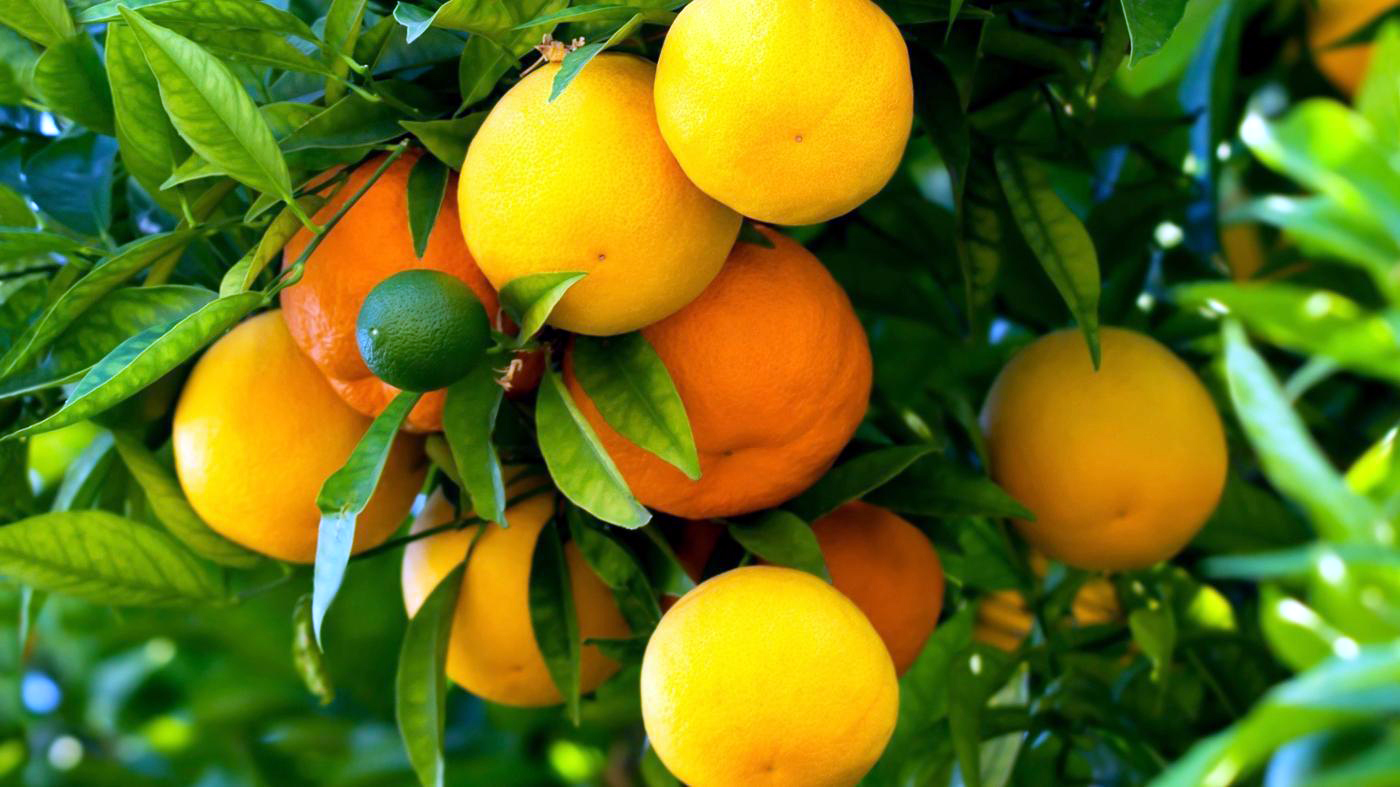 Simple Ways To Grafting Fruit Trees Nature Bring