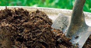 How to make Healthy Soil for garden | Building Healthy Soil for garden
