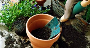 Select the best Container for your plants | Choose Best Containers