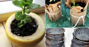 09 Perfect DIY Seed Starter for your miracle garden