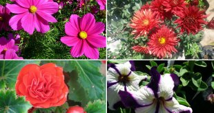 10 Splendid plants for Flower Bed  Gardening | Nature Bring