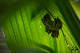 www.naturebyandreas.se-resebilder-naturfoto-panama-costa-rica_honduras-utila-15