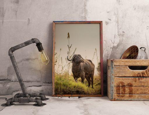 Fototavla buffel