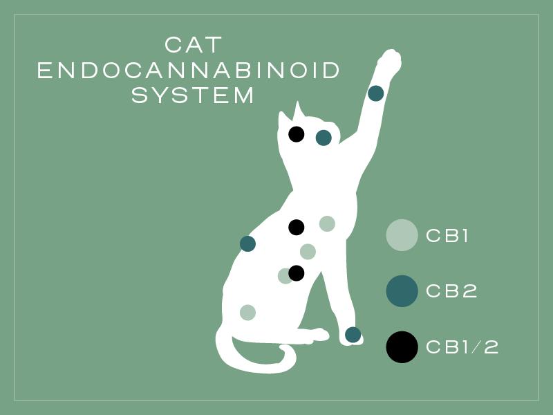 cat encannabinoid system