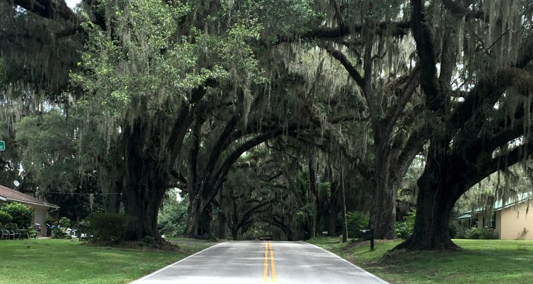 The Avenue of the Oaks in Floral City was created over 100 years ago.