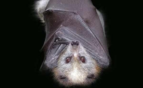 Wildlife Park Focuses on Bats for October – Lots of Events!