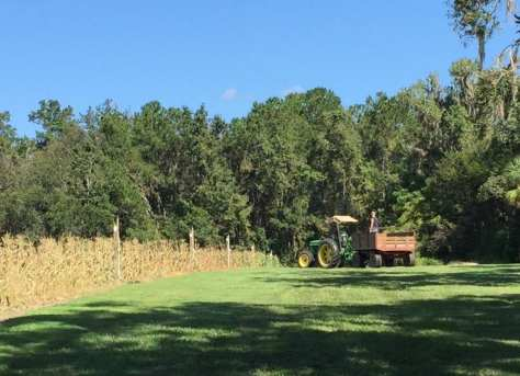 David takes one of his farm workers out to pick more of that sweet, golden corn.