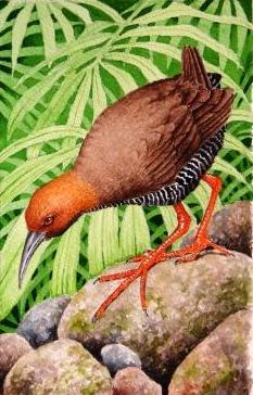Over 1,000 Extinct Pacific Birds