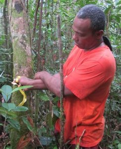 Survey of trees in the TESSA plot in Wainawa Village, Rewa Province