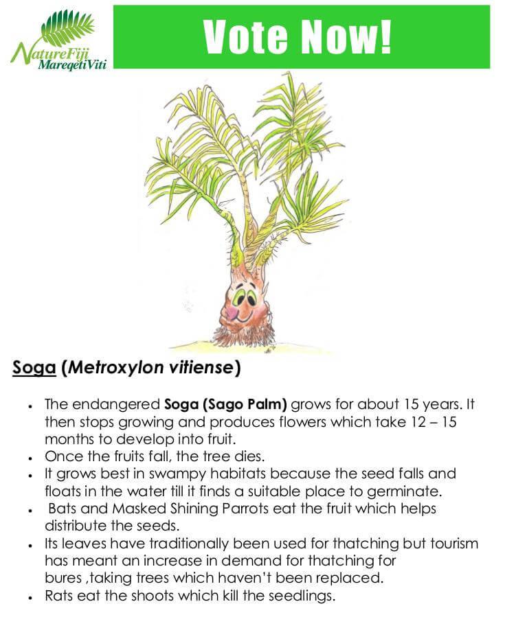 Soga (Metroxylon vitiense)