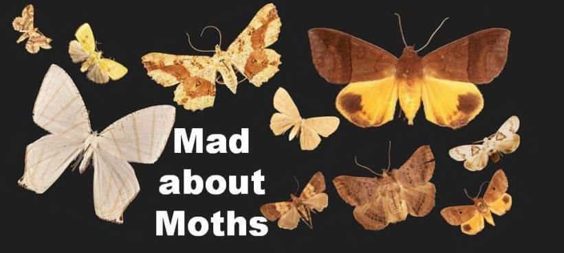 Join Siteri for a wonderful moth night at Colo-i-Suva