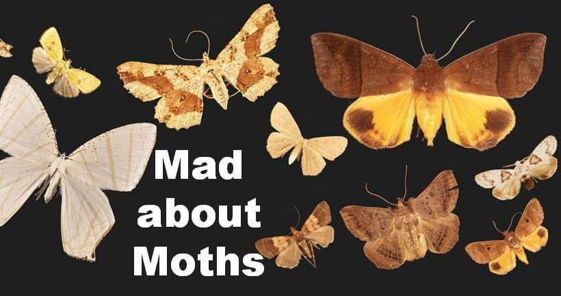 Saturday 18 March 2017 – Light Trapping Moths in Colo I Suva Forest Park