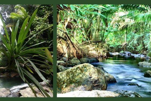 Savaurua Botanic Gardens, Pacific Harbour