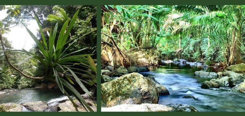 Explore the planned Savaurua Botanic Gardens