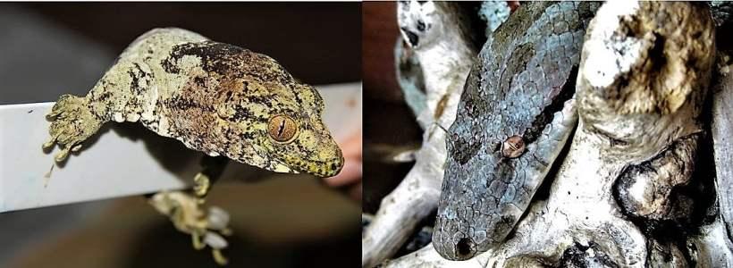 Meet Fiji's Amazing Reptiles!