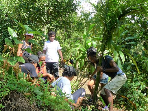 Safeguarding Fiji's Endangered Palms
