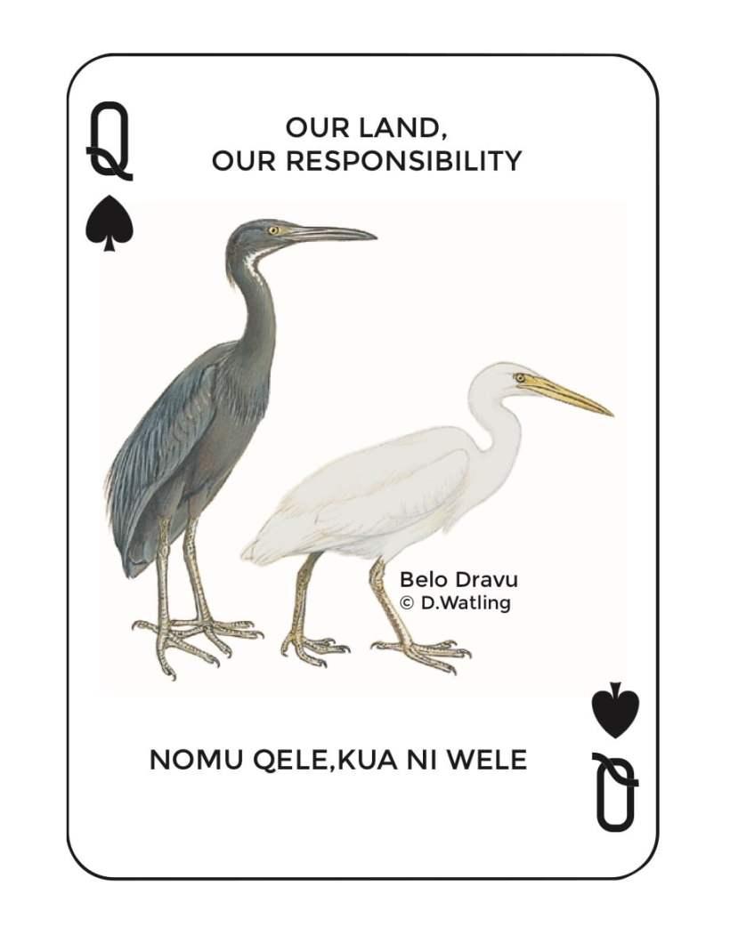 Birds in Fiji's Forests: Belo Dravu