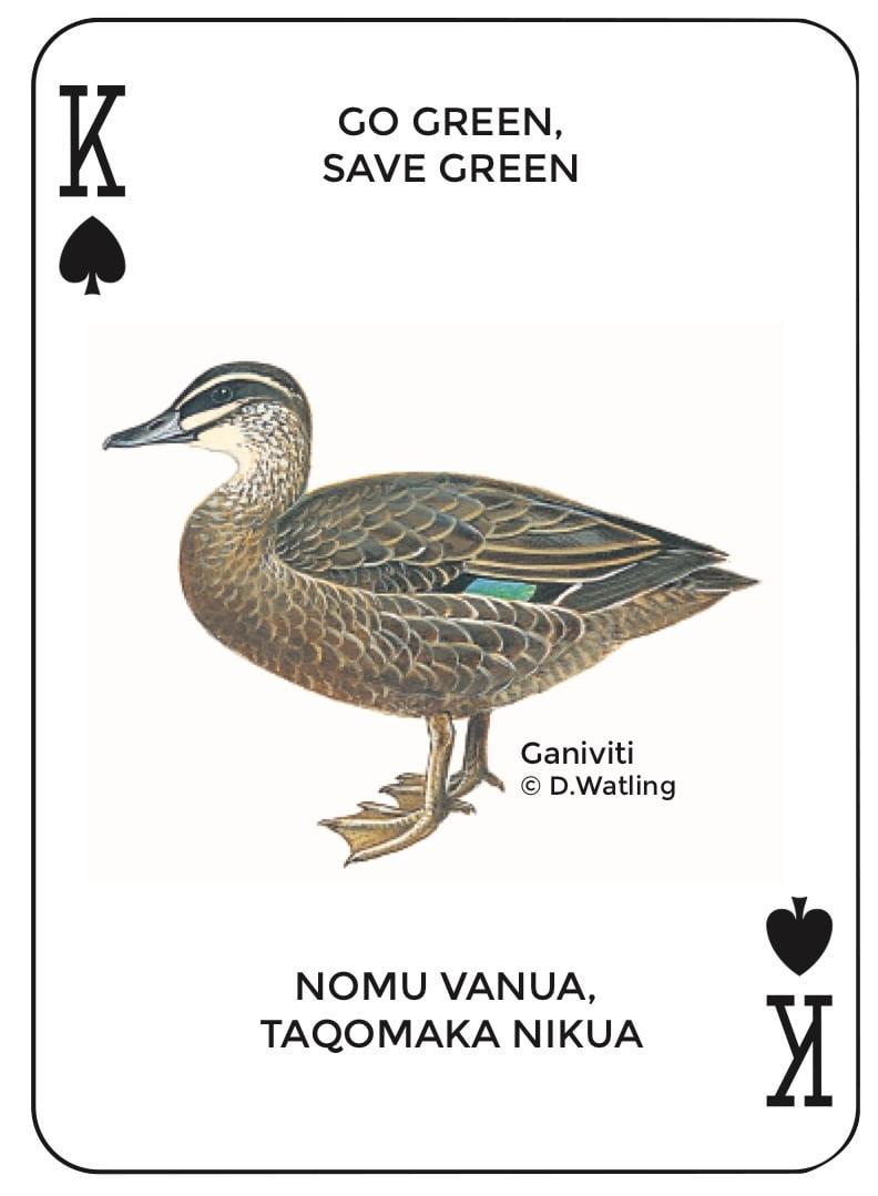 Birds in Fiji's Forests: Ganiviti