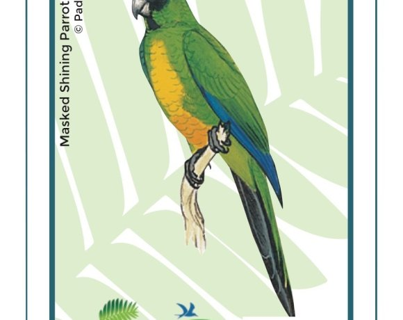 Birds in Fiji's Forests: Kaka
