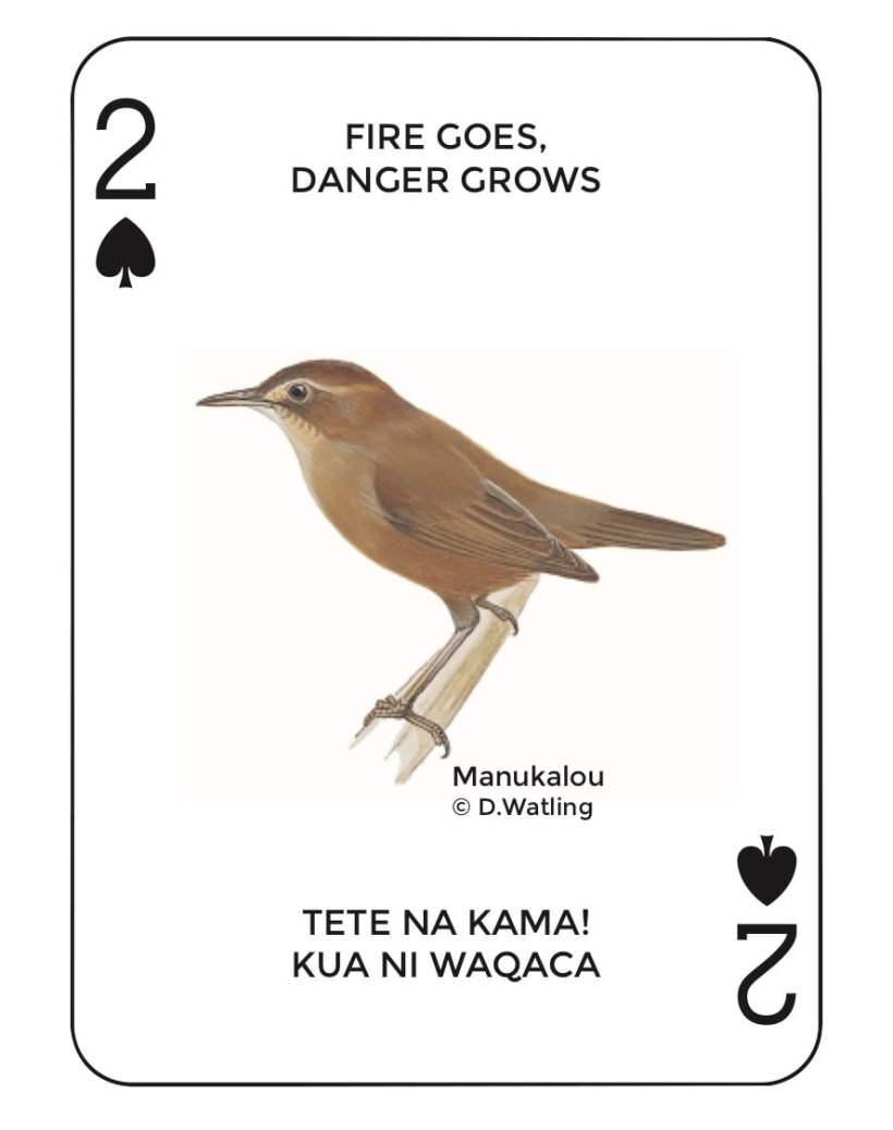 Birds in Fiji's Forests: Manukalou