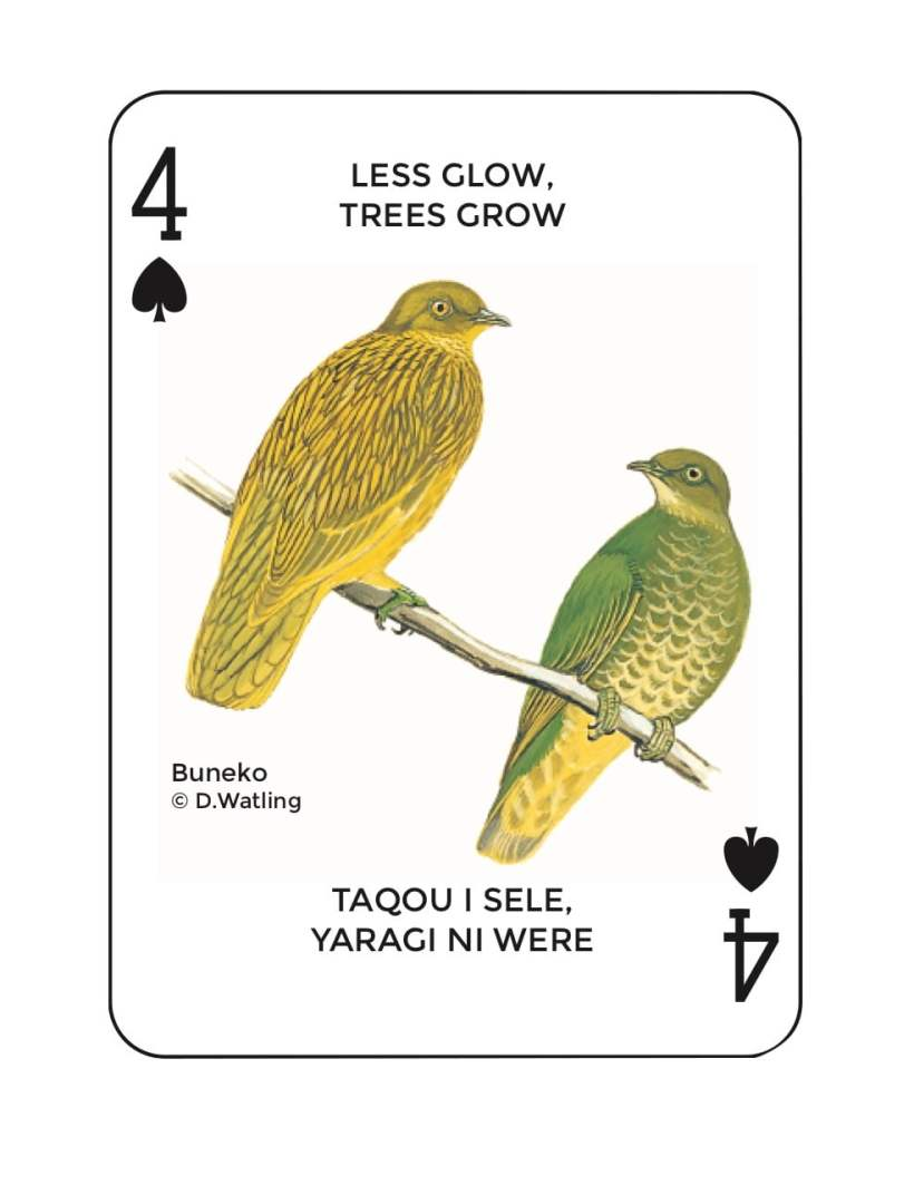 Birds in Fiji's Forests: Buneko