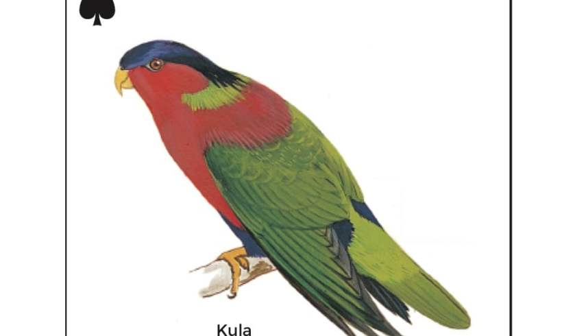 Birds in Fiji's Forests: Kula