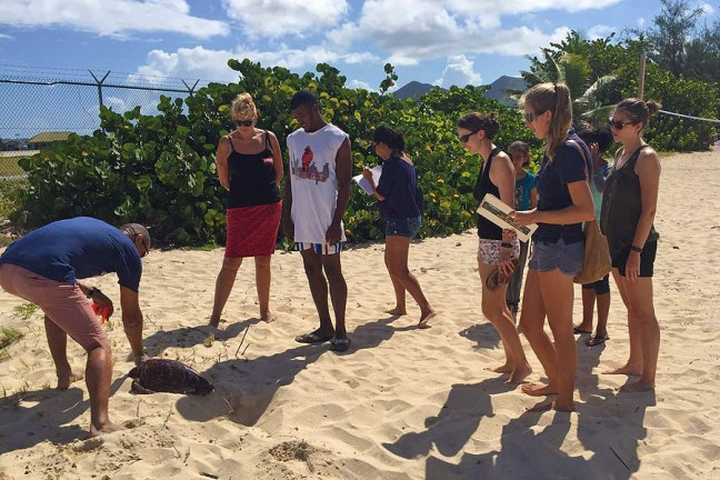 group of people watchign sea turtle