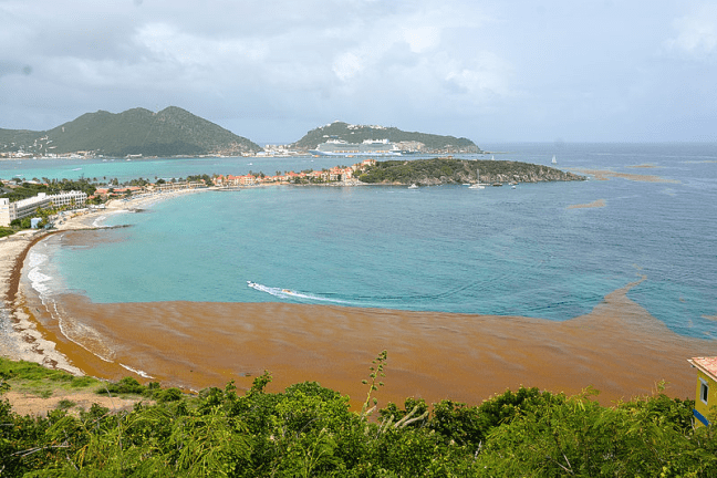 sargassum seaweed filling a beach