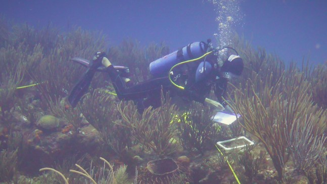 GCRMN reef research