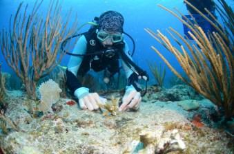 Coral Restoration St. Maarten. Photo by Leslie Hickerson