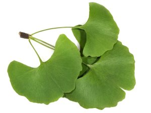 natural remedies for Alzheimer gingko biloba