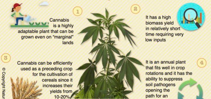 Cannabis / Hemp Biofuel - Nature Going Smart
