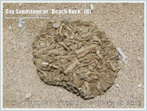 "Cay Sandstone or ""Beach Rock"" (8) - Broken slab of coral fragments cemented together in Cay Sandstone or ""Beach Rock"" on Normanby Island, one of the Frankland Islands, Queensland, Australia."