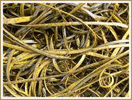 Common British seaweed