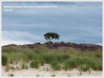 Sand dunes with Marram Grass at Studland