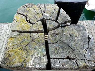Cross-section through weathered wooden post