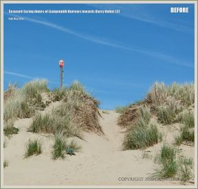 Un-eroded sand dunes at Rhossili in May 2012