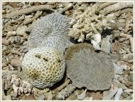 Pieces of dead coral on the beach at Normanby Island