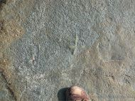 Detail of Chondrites trace fossils in Silurian rock from the Dingle Peninsula