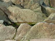 Chondrites trace fossils in Silurian rock from the Dingle Peninsula
